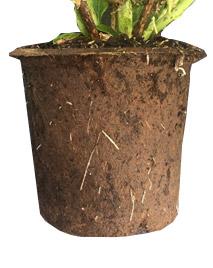 Pot 100% (After pot culture)